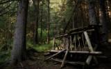 Wood call