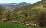 Bran (sat Pestera), Romania