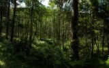 Wood panorama