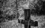 Crucea din gradina