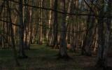 Padure, Cotul Turzunului